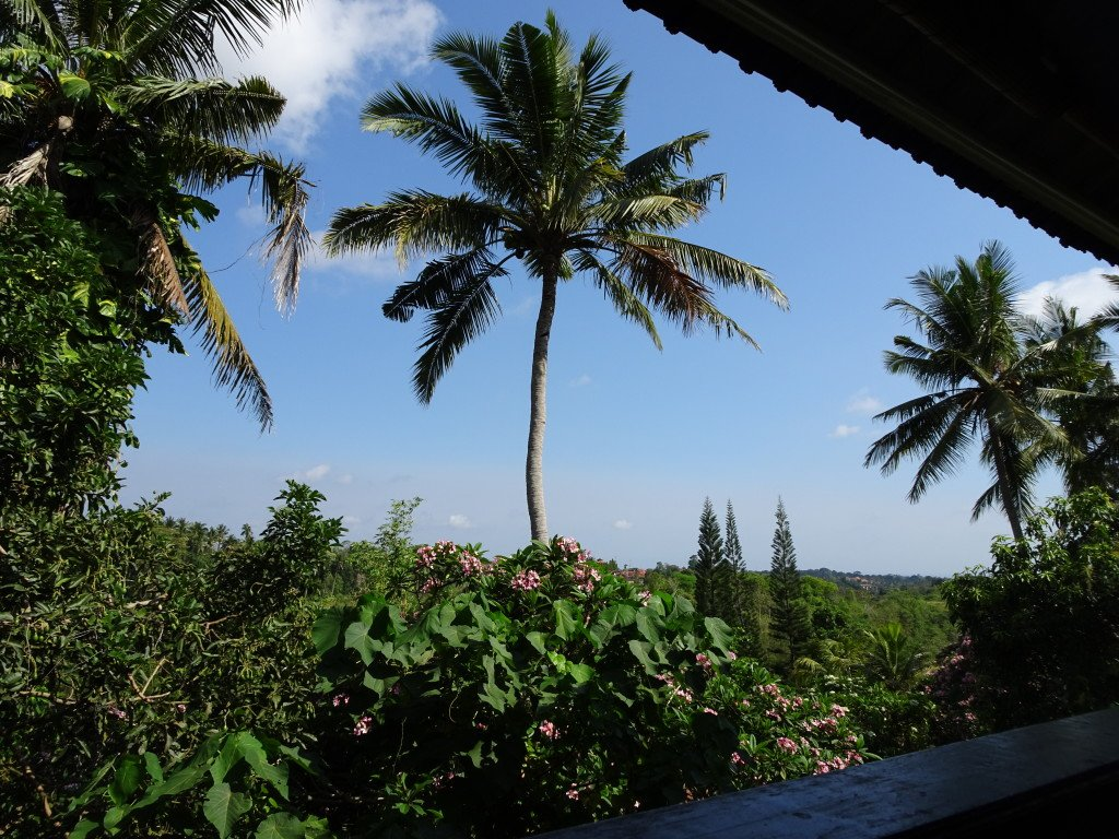 View from The Elephant café, Ubud, Bali